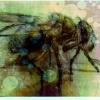 Fliege Skizze